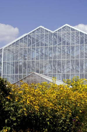 brown  eyed: brown eyed susan flower and large green house Editorial
