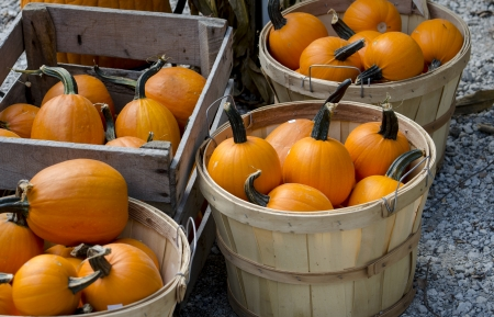bushel: bushel baskets of pumpkins