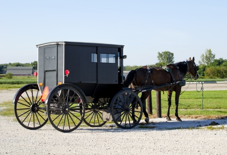 amish buggy: old fashioned horse and buggy