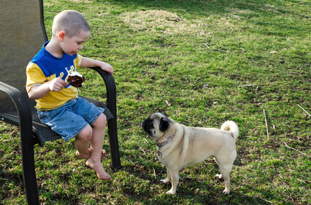 Little boy eating ice cream stares at a pug dog who is begging for a bite  this is mine not yours  photo