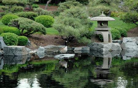 geese hang out and soak up some zen in a pretty oriental garden