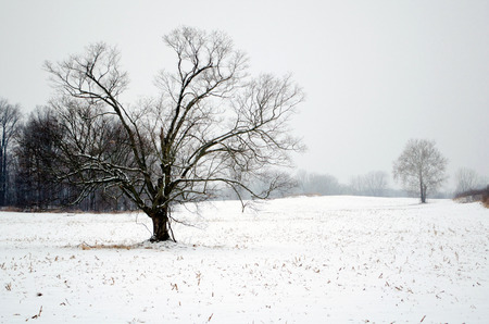 covered fields: a rural michigan winter scene of snow covered fields and trees