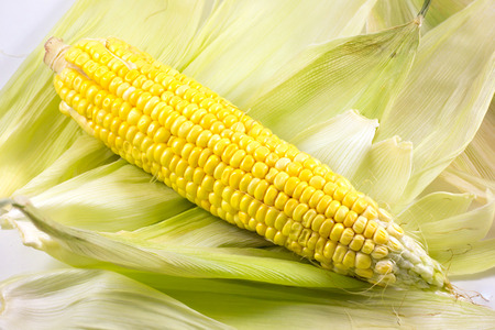shucked: corn on husks Stock Photo