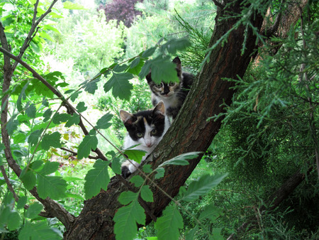 Two spotty cute young kittens sitting on a tree stare at the camera. Bright spring-summer photo with funny domestic cats close-up outdoors Stock Photo