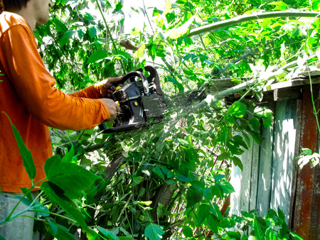 A man in orange clothes cuts down the branches with chainsaw in a summer sunny day. Cleaning of green thickets of wild bushes, sawdust is flying from under the saw Stok Fotoğraf