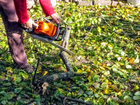A man sawing a wooden snag on the ground among yellow-green leaves. Worker holds a chainsaw and saws a branch on an autumn sunny day, sawdust flying around, background with copy space Stok Fotoğraf
