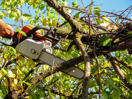 Chainsaw in hand among the branches of apricot tree with green-yellow leaves against a blue sky. Chainsaw work concept in the garden, park or forest on an autumn sunny day, background with copy space Archivio Fotografico