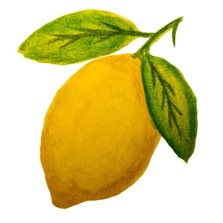 Watercolor drawing of a yellow lemon on a branch with green leaves. Ripe juicy citrus isolated on white background