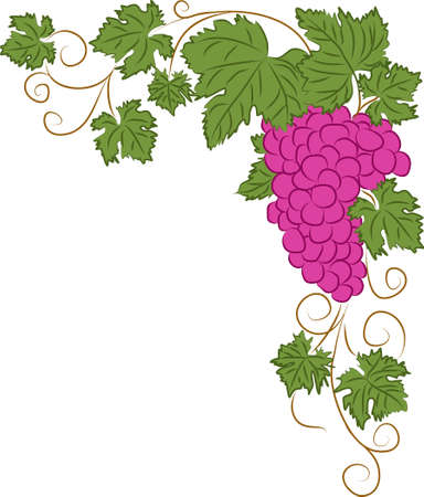 Vector corner floral frame with bunch of pink grapes among leaves and twisting stems. Simple flat clipart of the grapevine isolated on white. Background with copy space 向量圖像