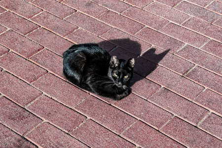 Black cat with green eyes and shiny healthy fur basking in the sun outdoors. Beautiful pet isolated on a background of red brick paving slabs, close-up 版權商用圖片