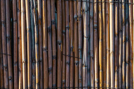 Texture of wooden rods or dry old bamboo sticks. Part of a wall or fence made of natural rustic materials