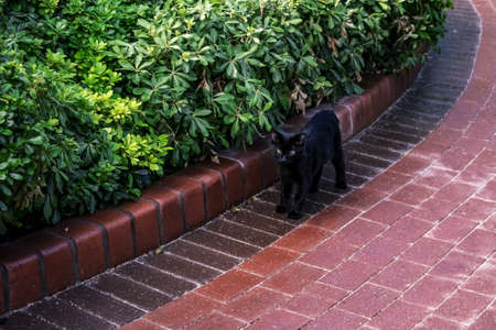 Black homeless blind cat on the background of red paving slabs and green flower beds in the city park. A wild young kitten with one eye stands outdoors. Animal protection concept