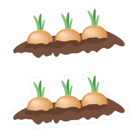 Cartoon clipart of a garden with growing onions isolated on white background. Vector sticker with a contour for cutting of the vegetables growing from the ground