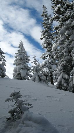 trecking: forest in winter Stock Photo