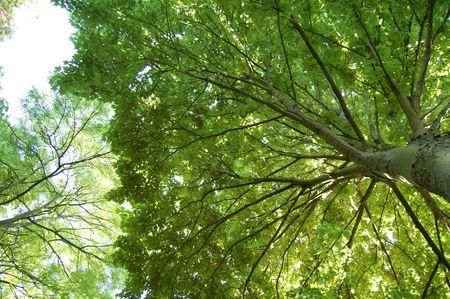 ramification: green sky Stock Photo