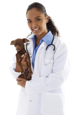 흰색 배경 위에 작은 강아지와 함께 여성 수의사의 재고 이미지