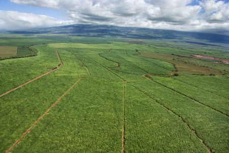 cropland: Aerial of irrigated cropland in Maui, Hawaii.