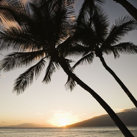 Ocean with palm sunset. photo