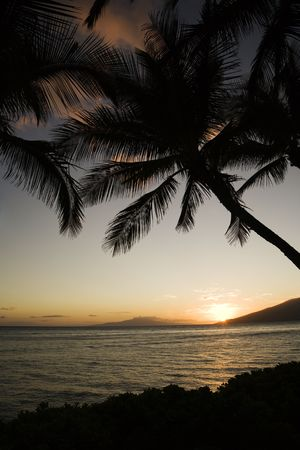 Sunset over Pacific ocean with silhouetted palm trees. photo