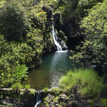 Waterfall surrounded by lush green vegetation in Maui, Hawaii. photo