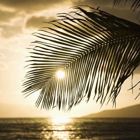 Palm trees silhouetted against sun setting over Pacific ocean in Maui, Hawaii. photo