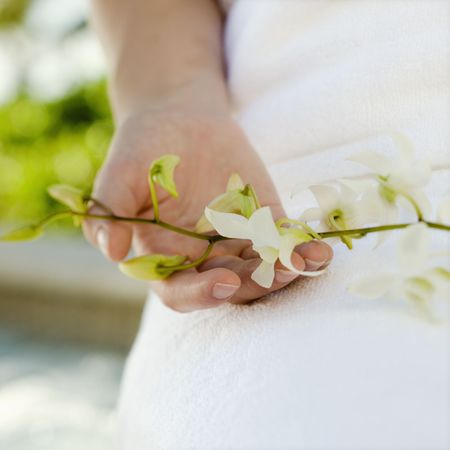 Hand holding orchids. Stock Photo - 1850329