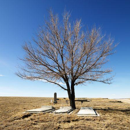 empty tomb: Three tombstones under a tree in cemetery.