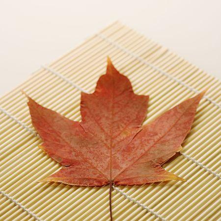 sugar maple: Red Sugar Maple leaf resting on bamboo mat.