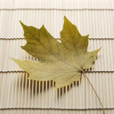 sugar maple: Sugar Maple leaf resting on bamboo mat.