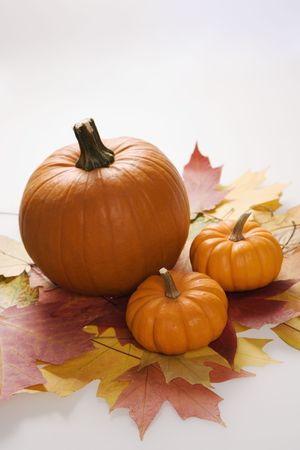 Still life of orange pumpkins sitting on group of Maple leaves in Fall color against white background. Stock Photo - 1906430