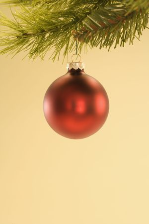 customs and celebrations: Still life of red Christmas ornament hanging from pine branch.