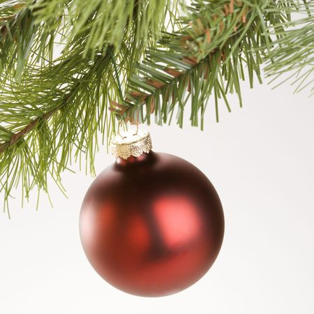 Still life of round red Christmas ornament hanging from pine branch. Stock Photo - 1906648