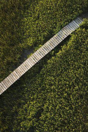 wetlands: Wooden boardwalk over wetlands. Stock Photo