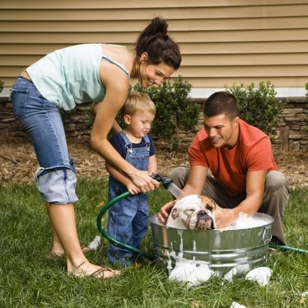 Caucasian family with toddler son washing English Bulldog in backyard.