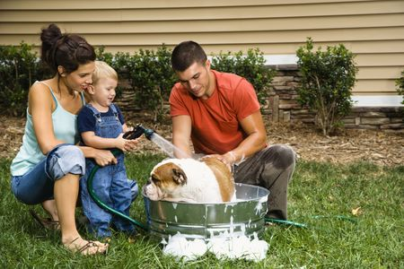 Caucasian family with toddler son giving  English Bulldog a bath outdoors. Stock Photo - 1964141