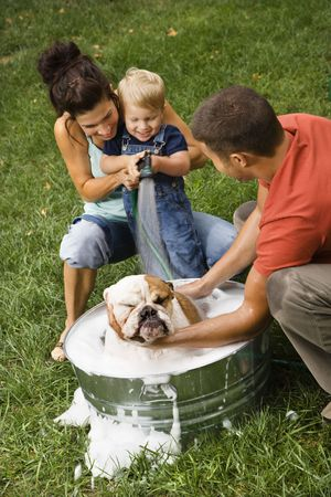 Caucasian family with toddler son giving  English Bulldog a bath outdoors. photo