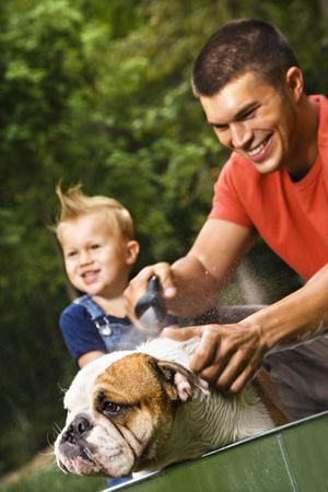 father children: Caucasian father and toddler son giving  English Bulldog a bath outdoors.