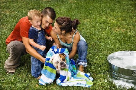 Caucasian family with toddler son drying English Bulldog with towel after a bath outdoors. photo