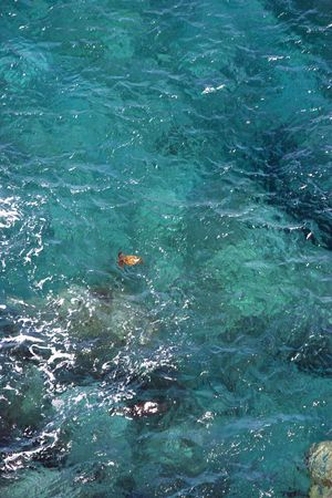 natural sciences: Aerial view of sea turtle swimming in tropical Hawaiian water.