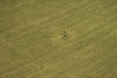 cropland: Aerial view of cultivated crop.  Stock Photo