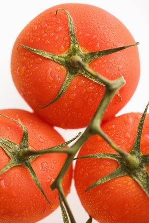 Close up of wet red ripe tomatoes against white background. photo
