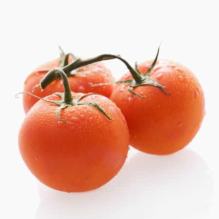 Three wet red ripe tomatoes on vine against white backgroound. photo