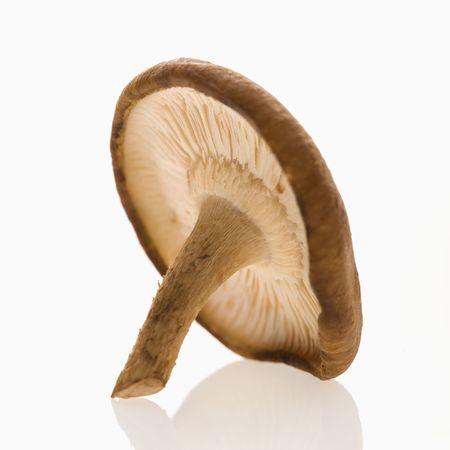 Single shiitake mushroom on white background. photo