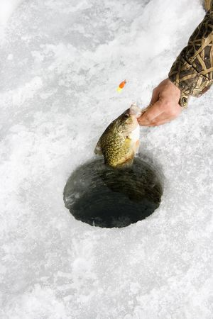 sunfish: Male hand pulling sunfish out of hole in frozen Green Lake in Minnesota. Stock Photo