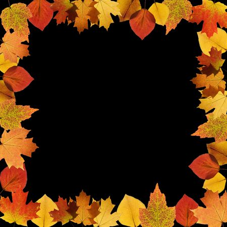 sugar maple: Frame composed of Sugar Maple leaves on black background. Stock Photo