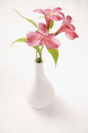 alstroemeria: Three pink Alstroemeria lilies in a white vase.