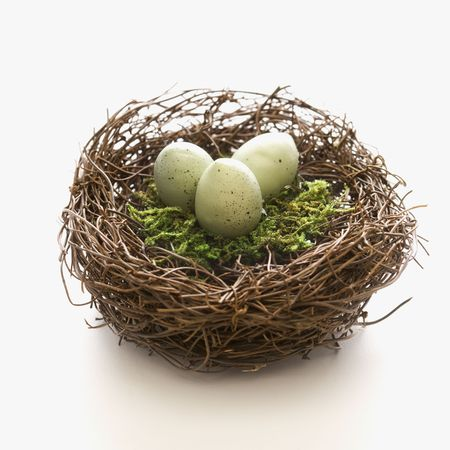 reproduction animal: Studio still life of birds nest with three speckled eggs. Stock Photo