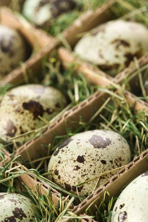 compartments: Speckled eggs packed in separate compartments.