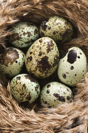 Speckled eggs in nest. Stock Photo - 2190084