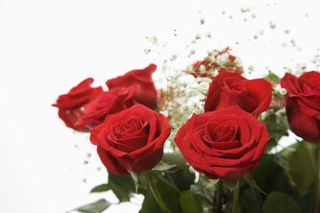Aroma de tallo largo de rosas rojas con la respiración del bebé contra el fondo blanco.  Foto de archivo - 2190841